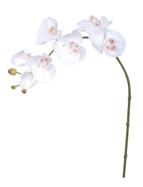 Orkidean oksa tekokasvi, Korkeus 73 cm, Punainen