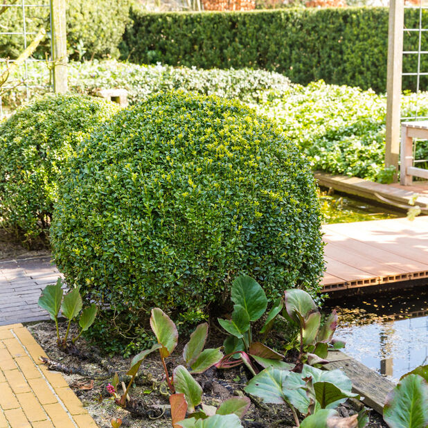 Puksipuupallo , Ø35 cm, Vihreä