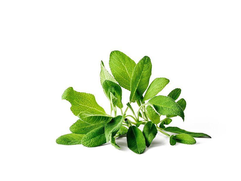 Salvia, Ø14 cm, Vihreä