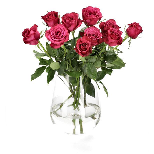 Ruusut premium Fairtrade 10-pakk, Korkeus 50 cm, Useita värejä