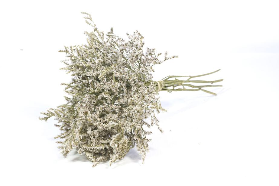 Ikiviuhko, Korkeus 50 cm, Valkoinen