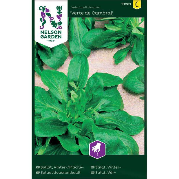 Salaattivuonankaali 'Verte de Cambrai', Monivärinen