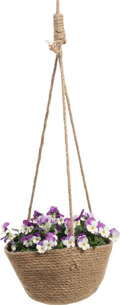 Orvokkiamppeli, Korkeus 30 cm, Useita värejä