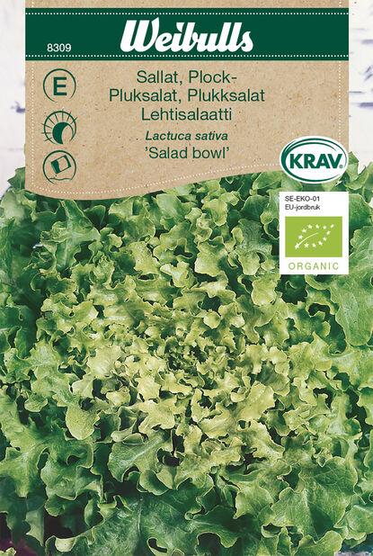 Lehtisalaatti 'Salad Bowl' Luomu