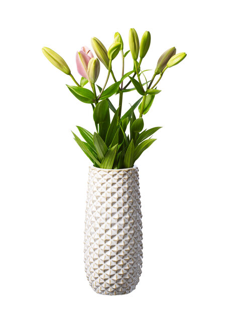 Liljat , Korkeus 60 cm, Useita värejä