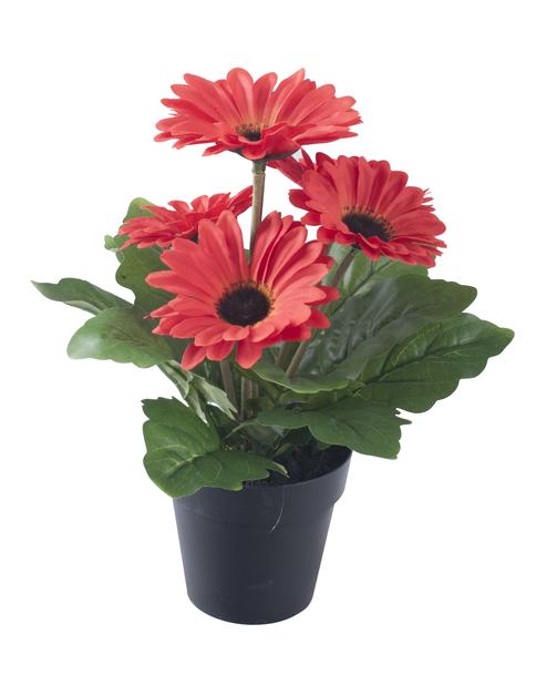 Gerbera  tekokasvi, Korkeus 28 cm, Punainen