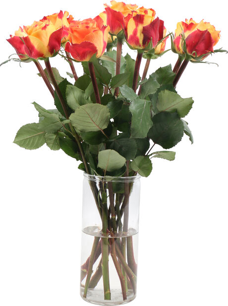 Ruusut Fairtrade, Korkeus 50 cm, Useita värejä