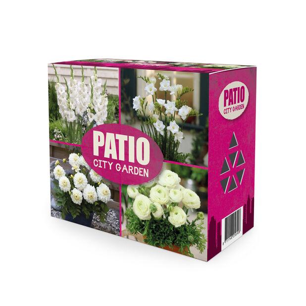 Kukkamukulalajitelma Patio city garden, Valkoinen