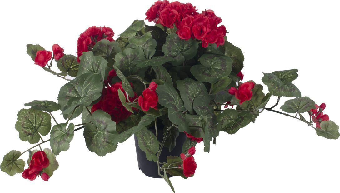Pelargoni tekokasvi, Korkeus 40 cm, Punainen