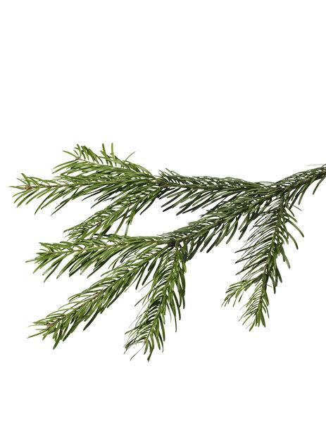 Kaukasianpihta jalallinen, Korkeus 60-80 cm, Vihreä