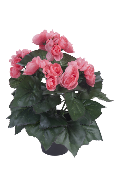 Begonia, K32 cm, roosa, tekokasvi