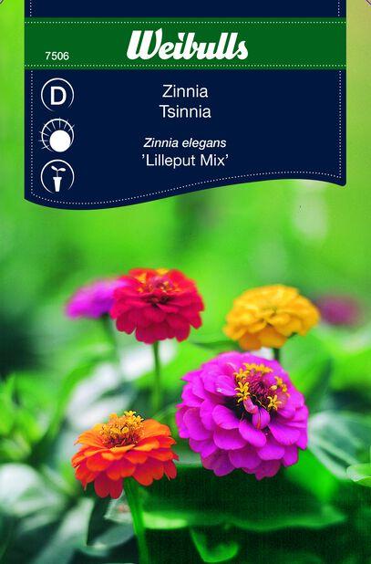 Tsinnia 'Lilleput'