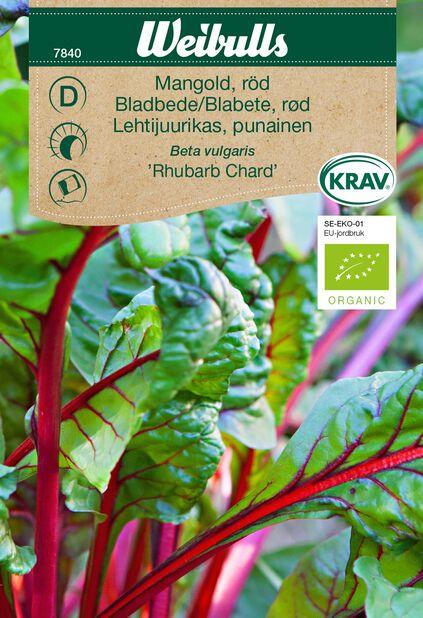 Mangoldi 'Rhubarb Chard' Luomu