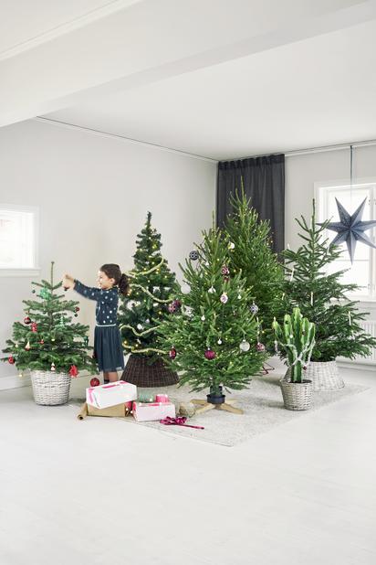 Joulukuusi, Korkeus 150-175 cm, Vihreä