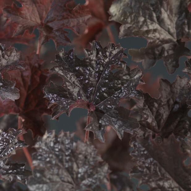 Keijunkukka, Korkeus 25 cm, Punainen
