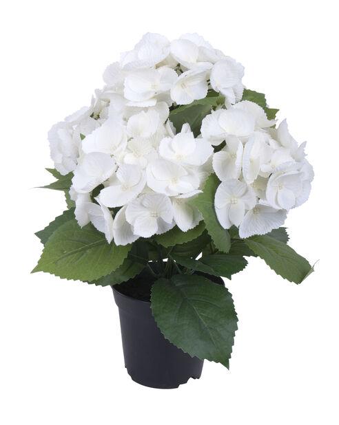 Hortensia ruukussa, K35 cm, valkoinen, tekokasvi