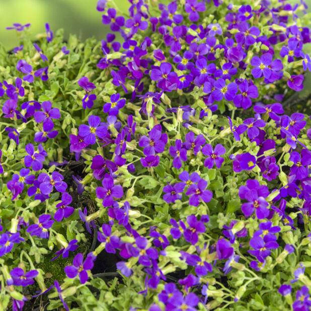 Ristikit 'Blaumeise', Ø17 cm, Sininen