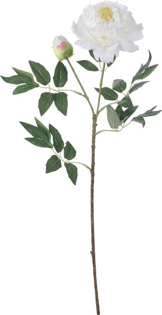 Pioni, Korkeus 61 cm, Musta