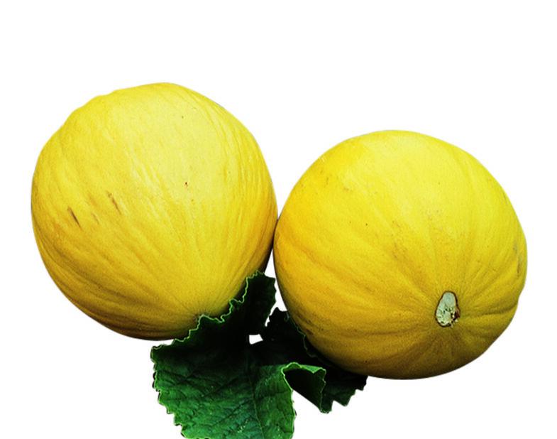 Hunajameloni 'Sweet Heart', Ø10.5 cm, Oranssi