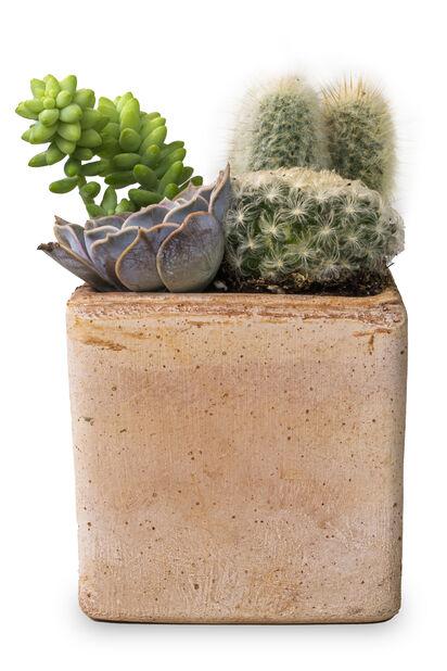 Kaktus- ja mehikasviruukku, Korkeus 20 cm, Vihreä