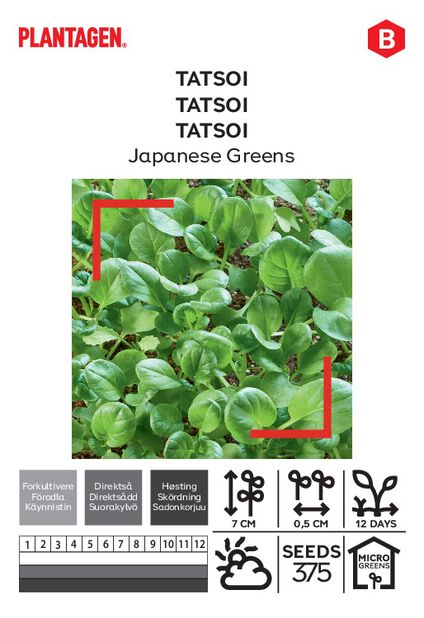 Tatsoi 'Japanese Greens'