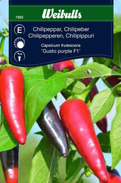 Chili 'Gusto Purple'