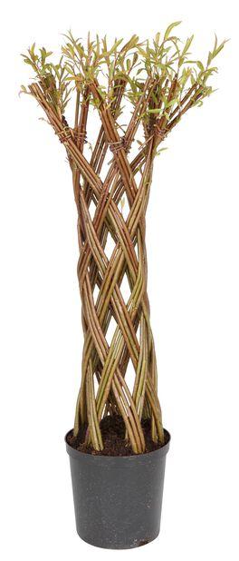 Kierrepaju, Korkeus 120 cm, Vihreä