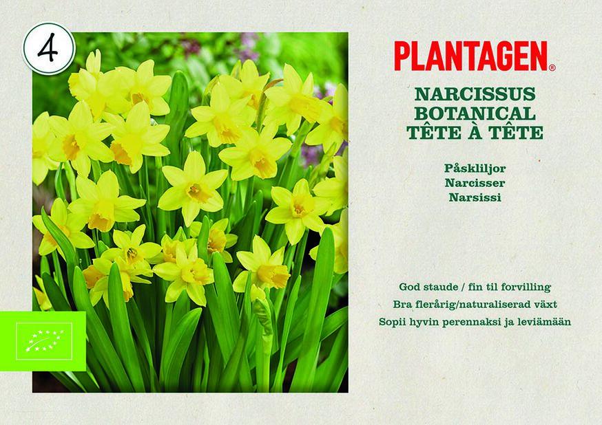Narsissi 'Tête à Tête' luomumerkitty, Keltainen