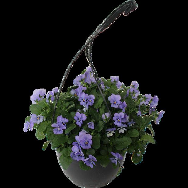 Viola h. basket 22 cm