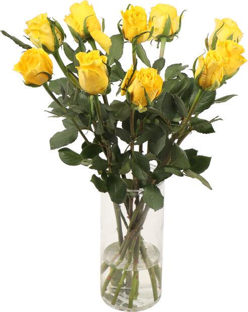Ruusut premium Fairtrade 10-pakk, Korkeus 50 cm, Keltainen