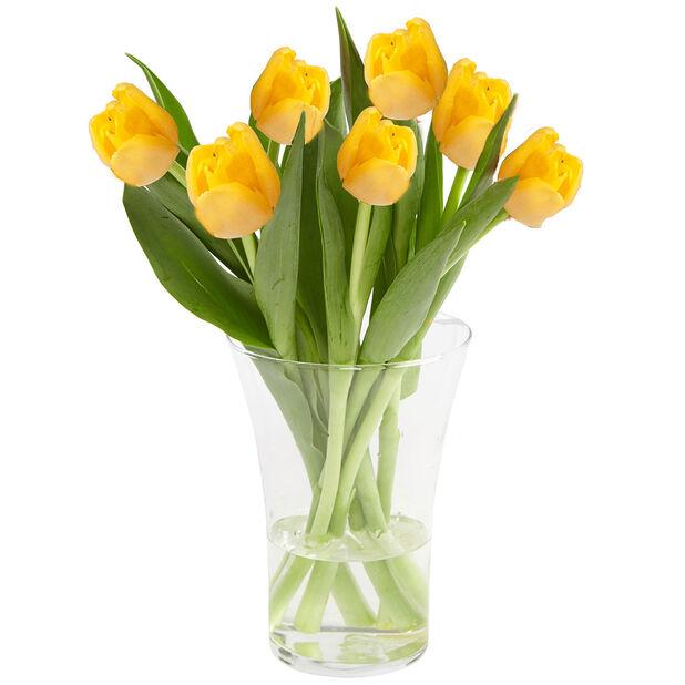 Tulppaanit, Korkeus 38 cm, Useita värejä