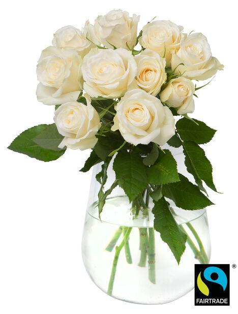 Ruusunippu 10 kpl