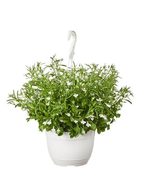 Lobelia White  h. basket 22 cm