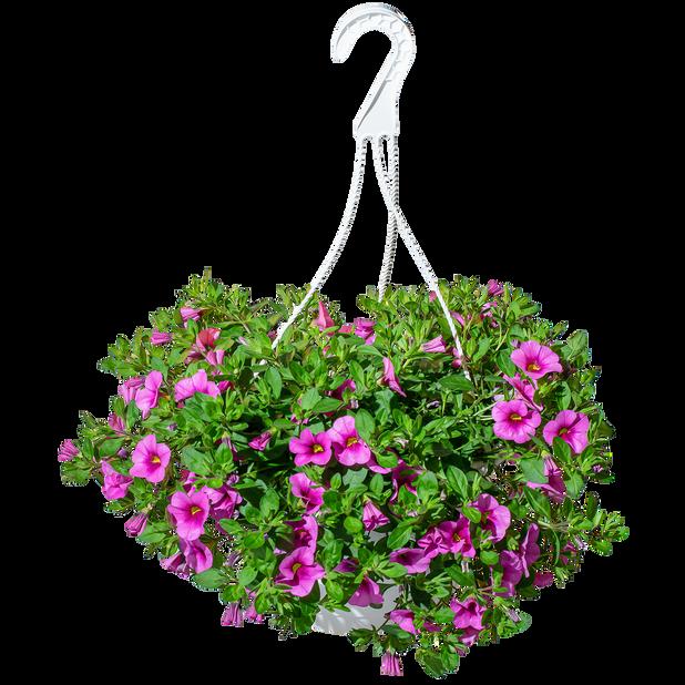Tarhapetunia-amppeli 25 cm
