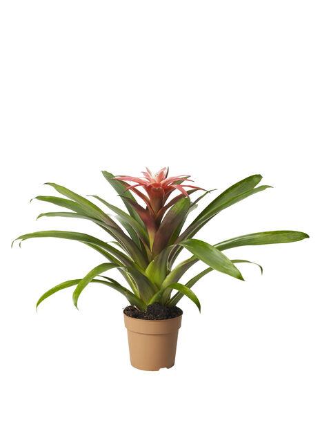 Timanttiananas pinkki 12 cm