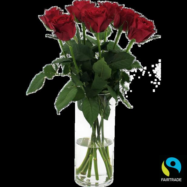 Ruusunippu, Korkeus 50 cm, Punainen