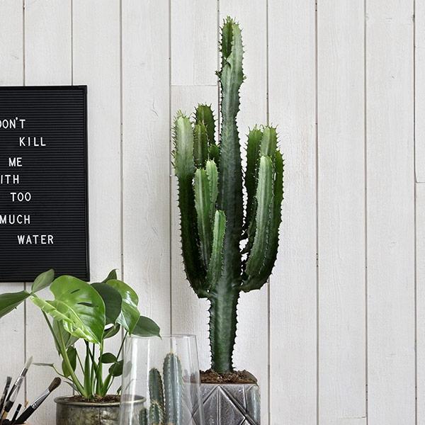 Kaktuksen näköinen tyräkki