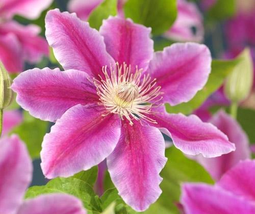 kärhö kukka